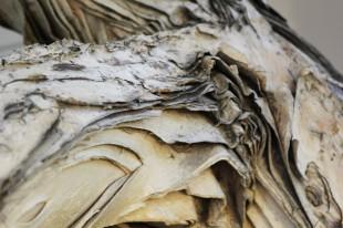 Peeling bark